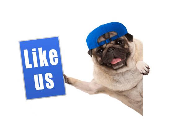 Frolic pug puppy dog holding up blue like us sign hanging sideways picture id914641864?b=1&k=6&m=914641864&s=612x612&w=0&h=nanaixwzf0f6ra5fcr4ybjem9nifcchjj8eoukmbpa8=