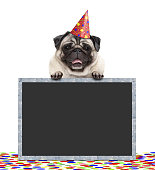 frolic smiling birthday party pug dog with hat and confetti and paws on blackboard sign, isolated on white background