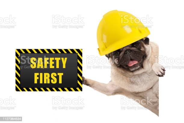 Frolic smiling pug puppy dog with yellow constructor helmet holding picture id1127384534?b=1&k=6&m=1127384534&s=612x612&h=mew aymlhq9s9jb1rgdqbf o7dger8 9scyrmnanjbs=