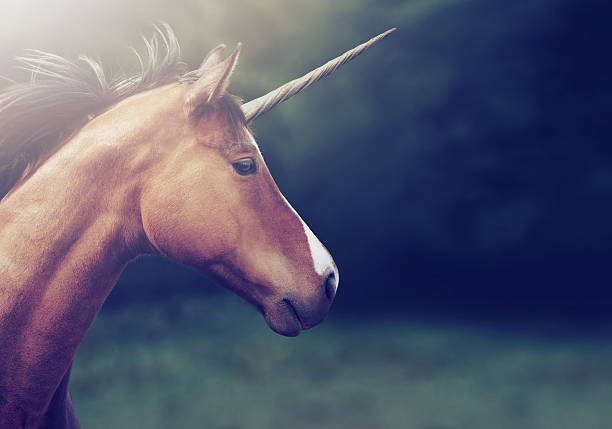 From a fairy tale Shot of a beautiful unicorn horned stock pictures, royalty-free photos & images