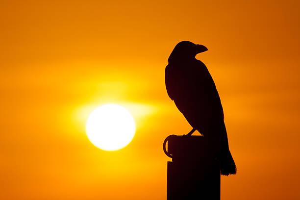 From dawn to dusk picture id476289630?b=1&k=6&m=476289630&s=612x612&w=0&h=vxfgdg ce no vdcwluog7ujlqem pb8b1lw5wrxqs4=