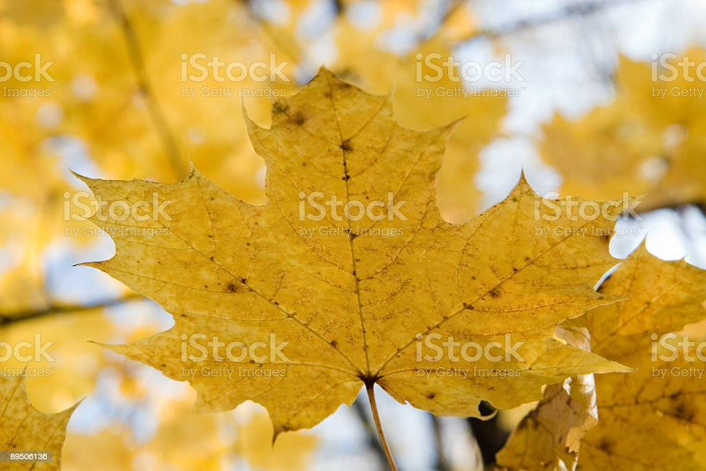 from fall to heaven royalty-free stock photo