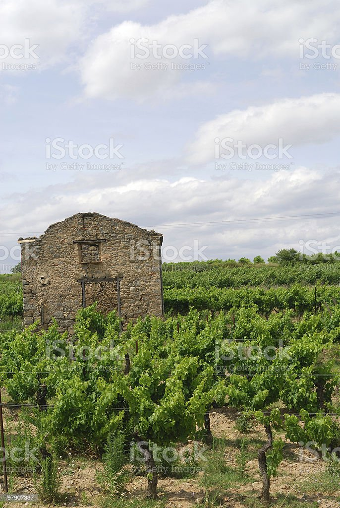 From Narbonne to Carcassonne (France) - Vineyard and ruin royalty-free stock photo