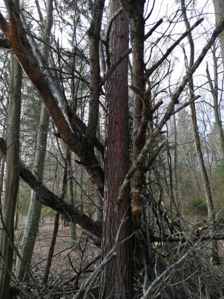 from  storm broken tree stock photo