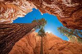 istock From the bottom of Bryce Canyon 1179934646