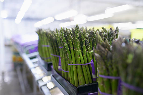 From the farm to the store- the process Shot of asparagus being processed in a planthttp://195.154.178.81/DATA/i_collage/pu/shoots/805486.jpg food warehouse stock pictures, royalty-free photos & images