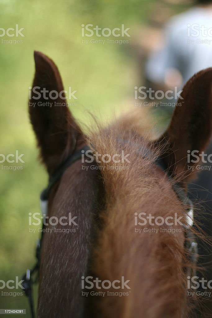 From the saddle royalty-free stock photo