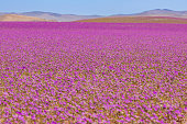 Bolivian Nature: