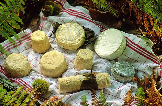 fromages de chèvre stock photo
