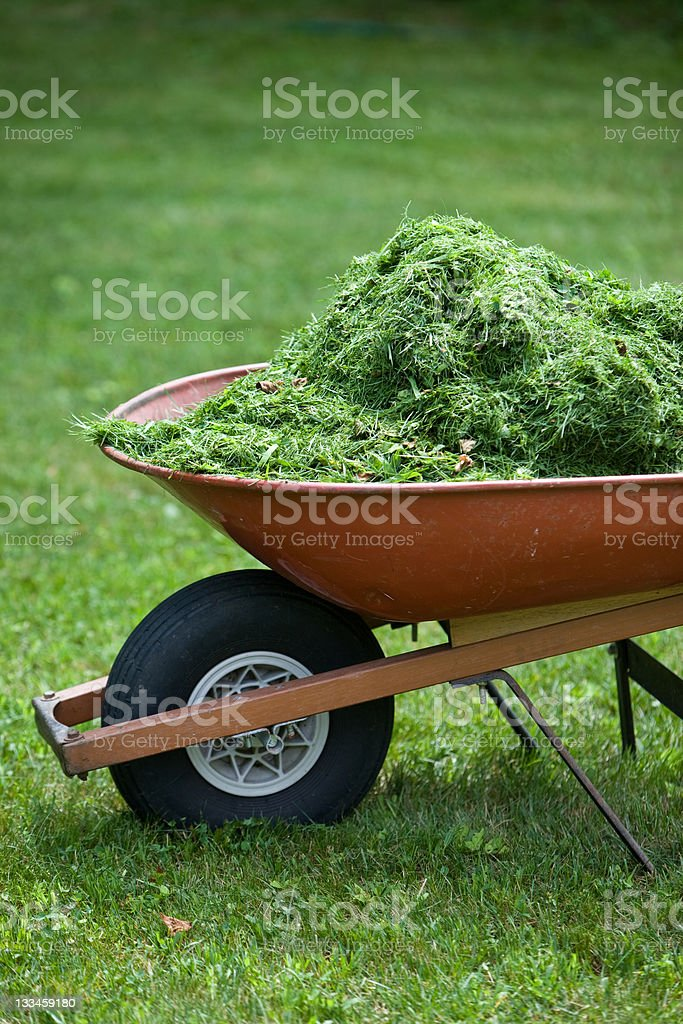 A detail of the front of a wheelbarrow with fresh summer grass...