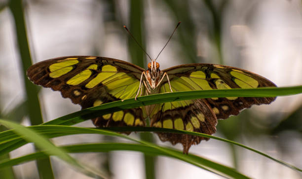 Front view of a butterfly stock photo
