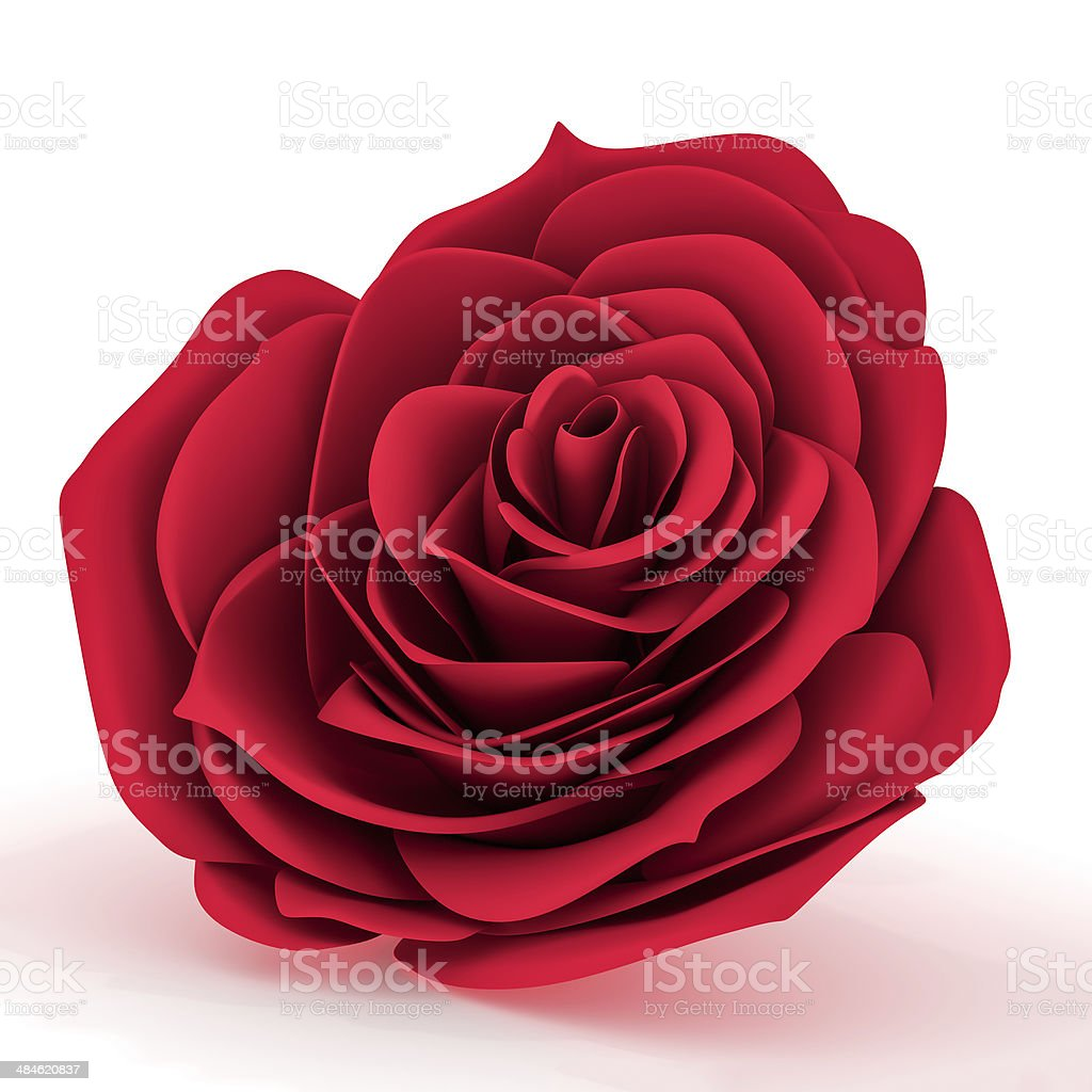 Front view of a red rose stock photo