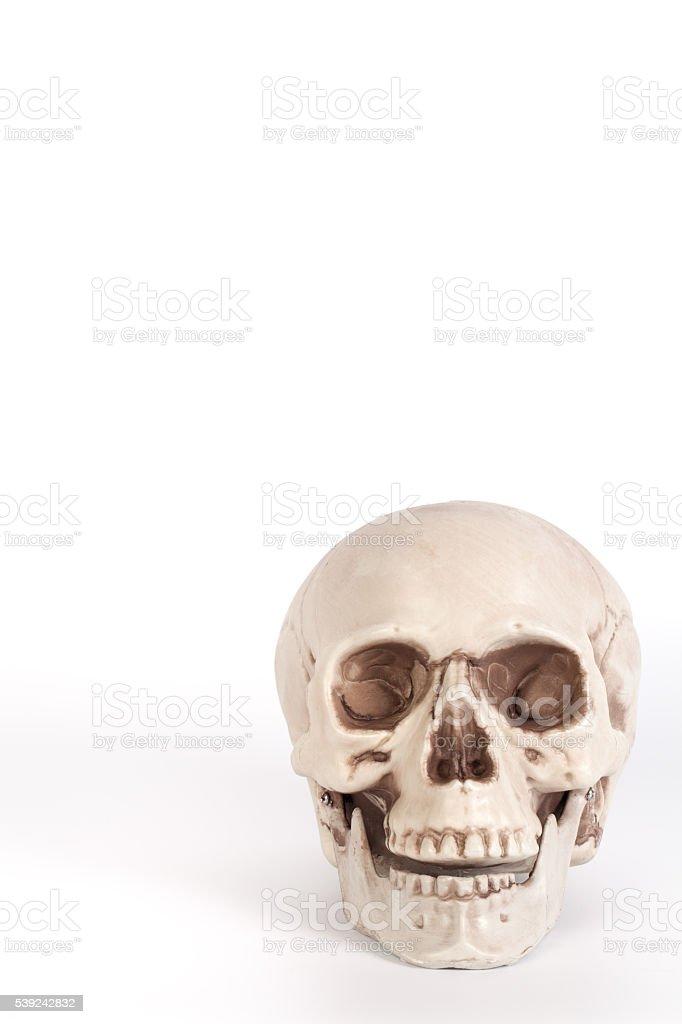 Vista frontal de um crânio com boca aberta isolado foto royalty-free