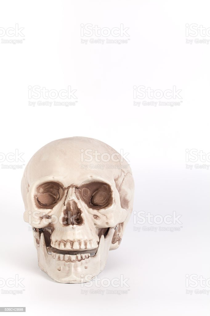 Front view of a skull with open mouth isolated royalty-free stock photo