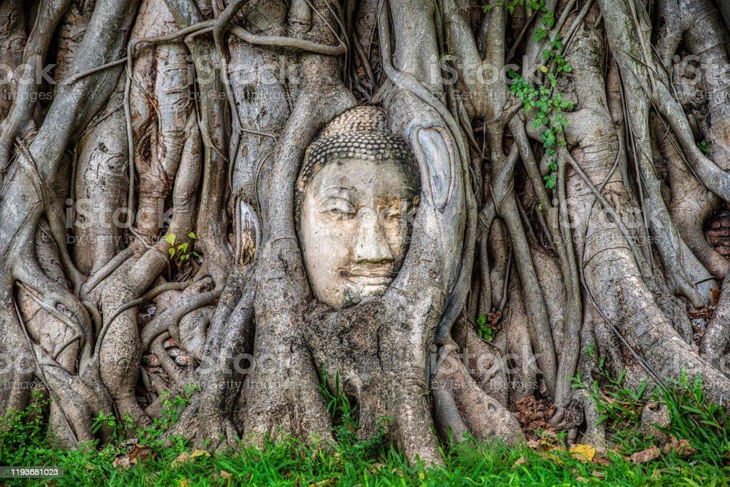 ağaçta Buda Yüz ön görünümü, Ayutthaya, Tayland - Royalty-free Ahşap Stok görsel