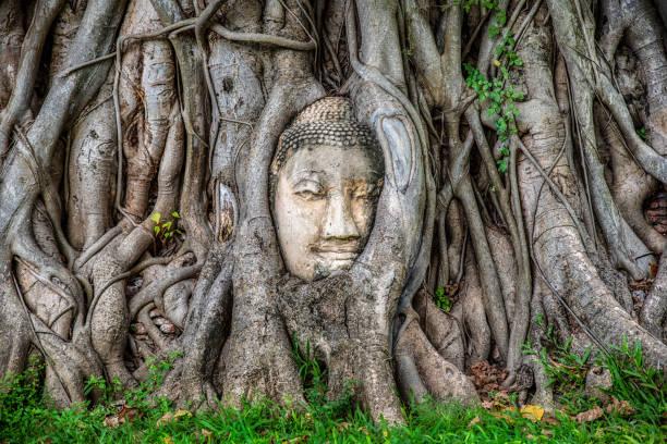 ağaçta buda yüz ön görünümü, ayutthaya, tayland - ayutthaya bölgesi stok fotoğraflar ve resimler