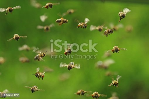 istock front view of flying honey bees in a swarm on green bukeh 969667122