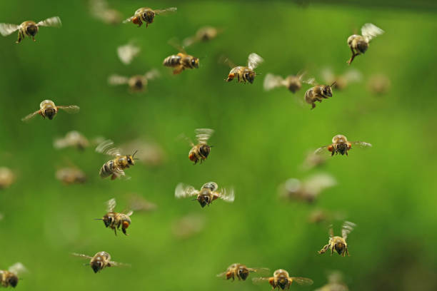 front view of flying honey bees in a swarm on green bukeh - ape foto e immagini stock