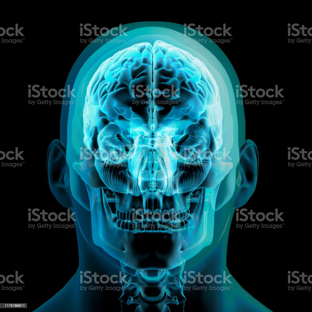 Human anatomy 3d rendering of a transparent turquoise front view of a...