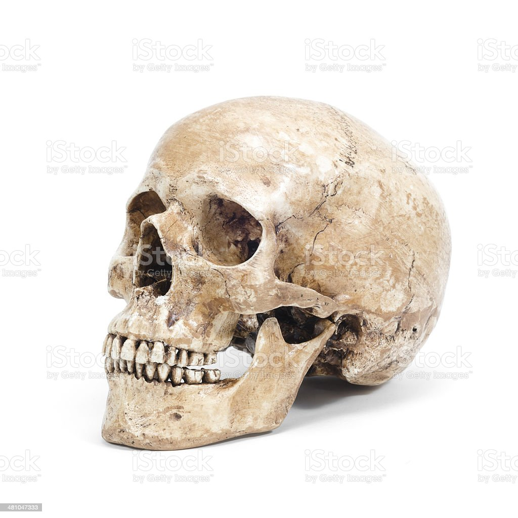 Front view of human skull isolated on white background royalty-free stock photo