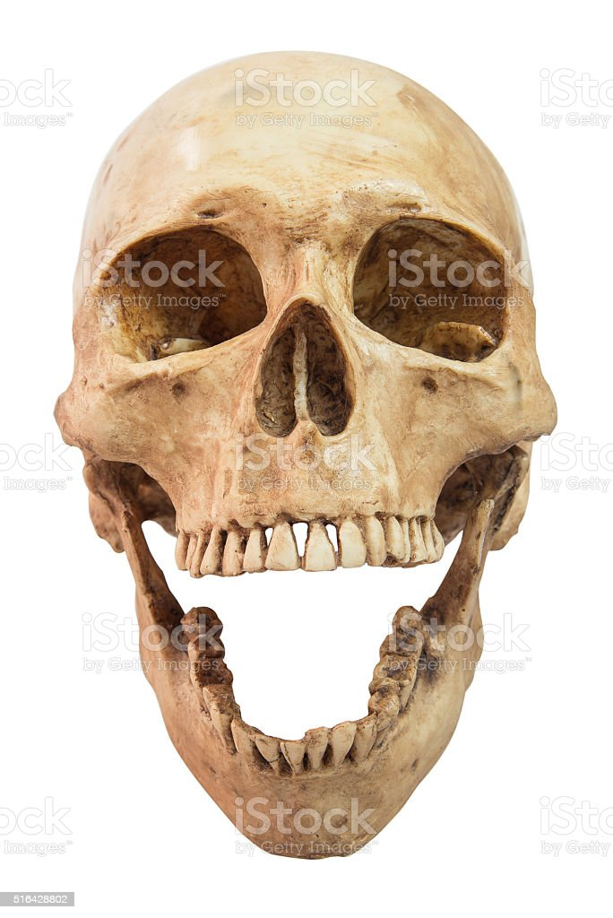 front view of human skull on isolated stock photo