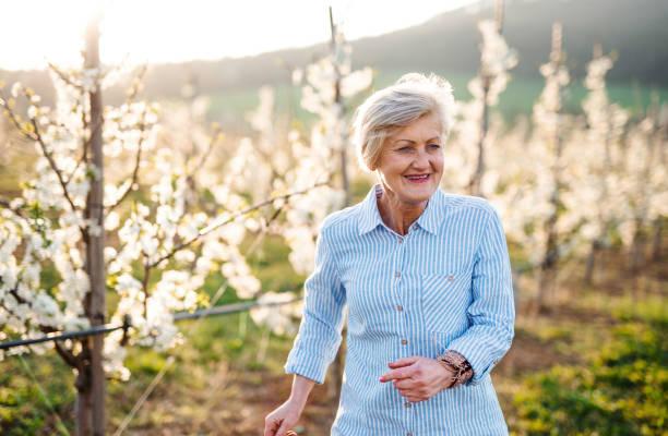 vue avant de femme aînée marchant dans le verger au printemps. - une seule femme senior photos et images de collection