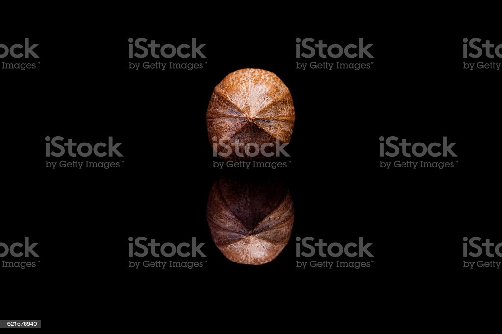 Front view on single shelled pecan nut isolated on black photo libre de droits