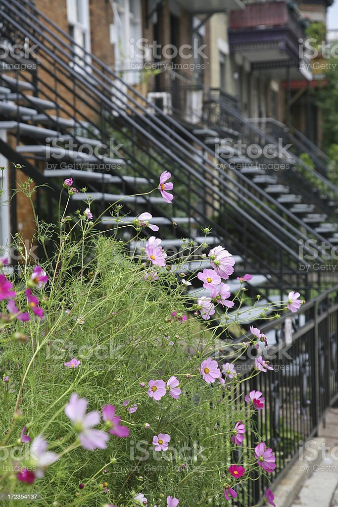 Front Yard Outside Home royalty-free stock photo