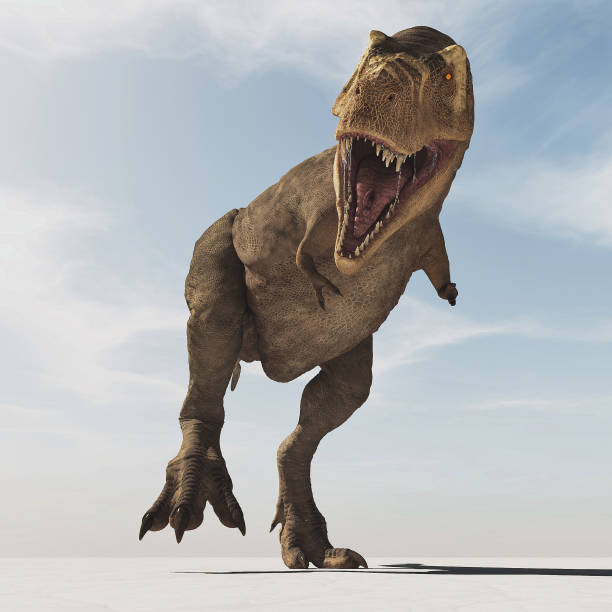 Frontal image of Tyrannosaurus Rex walk . This is a 3d render illustration stock photo