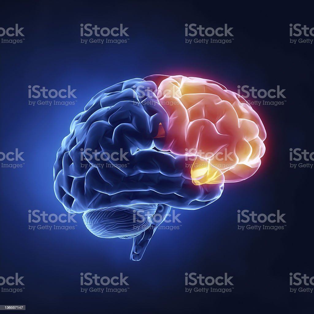 Frontal lobe - Human brain in x-ray view stock photo