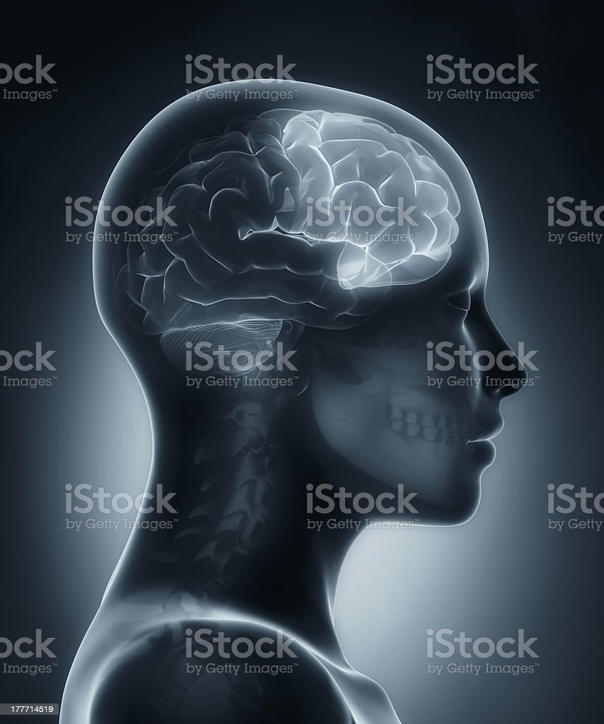 Frontal lobe medical x-ray scan stock photo