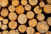 Frontal view of stacked cut logs, as background, pattern or texture