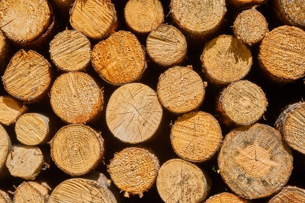 Frontal view of stacked cut logs, as background, pattern or texture Frontal view of stacked cut logs, as background, pattern or texture half timbered stock pictures, royalty-free photos & images
