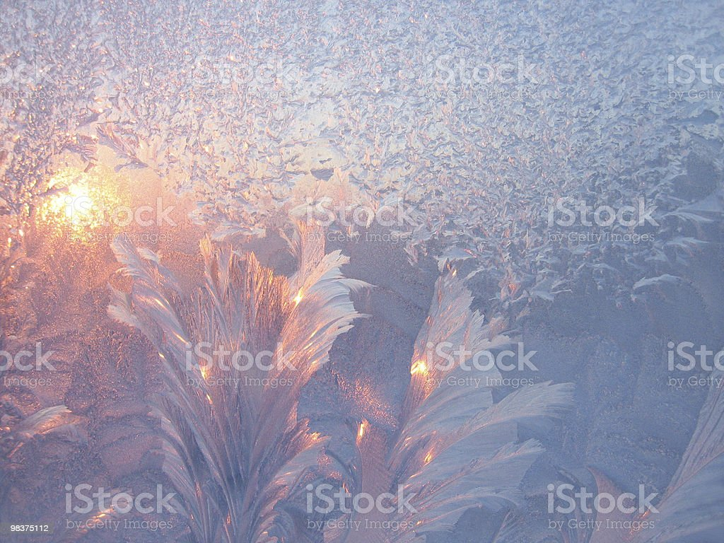 Frost and sun royalty-free stock photo