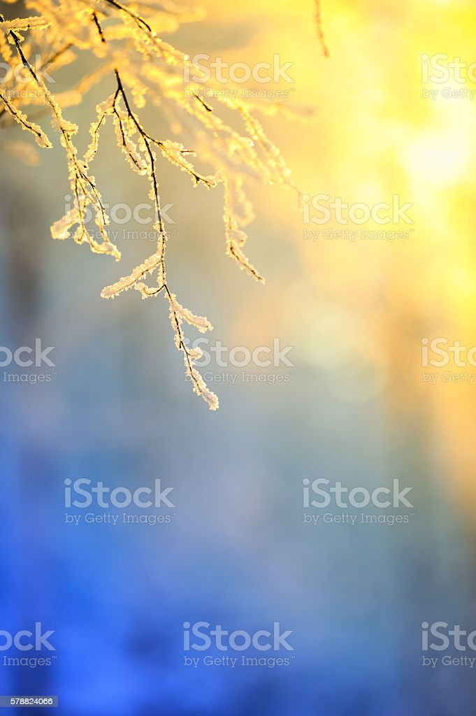 Frost covered birch tree branches stock photo