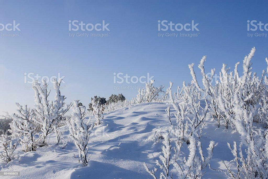 Frost coperto boccole foto stock royalty-free