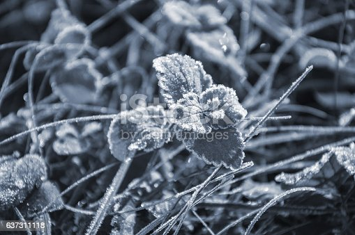 639394370istockphoto Frost covered grass and leaves 637311118