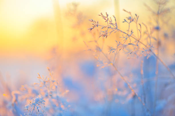 Frost covered grass stock photo