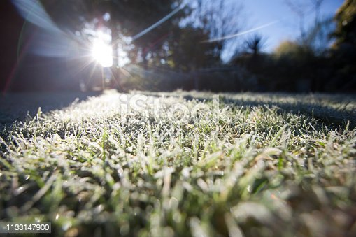 Frost covered lawn in winter, UK
