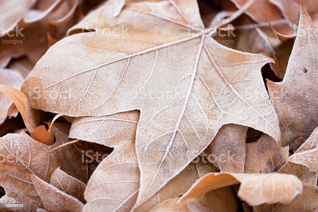 Frost Covered Leaves stock photo