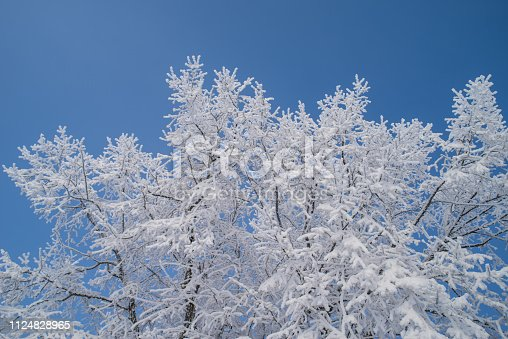 875265254 istock photo frost covered tree branches 1124828965