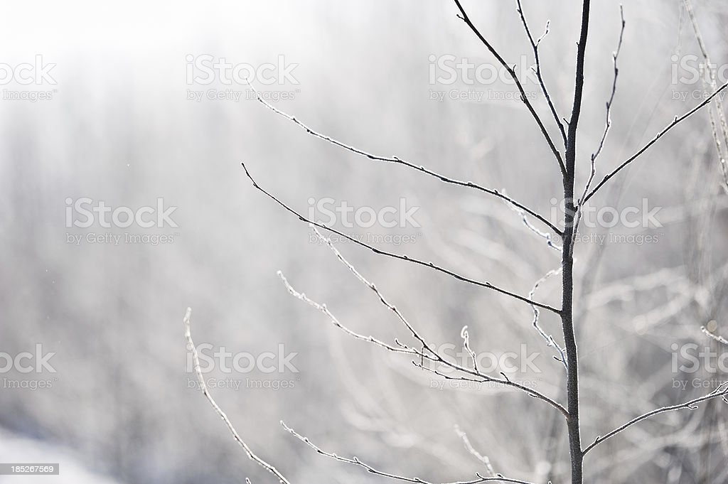 Frost covered tree branches stock photo