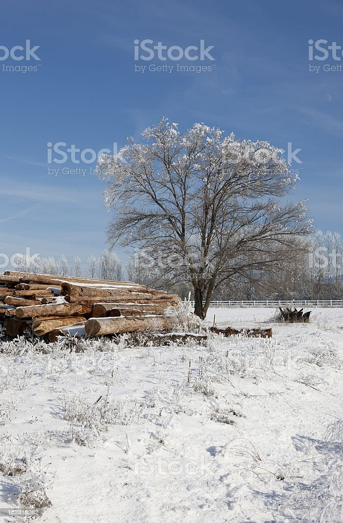 Frost covered tree on a winter day. royalty-free stock photo