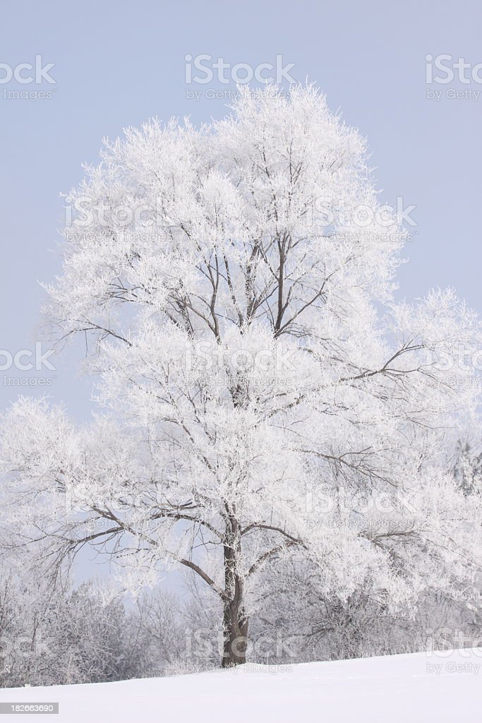 Frost covered tree royalty-free stock photo