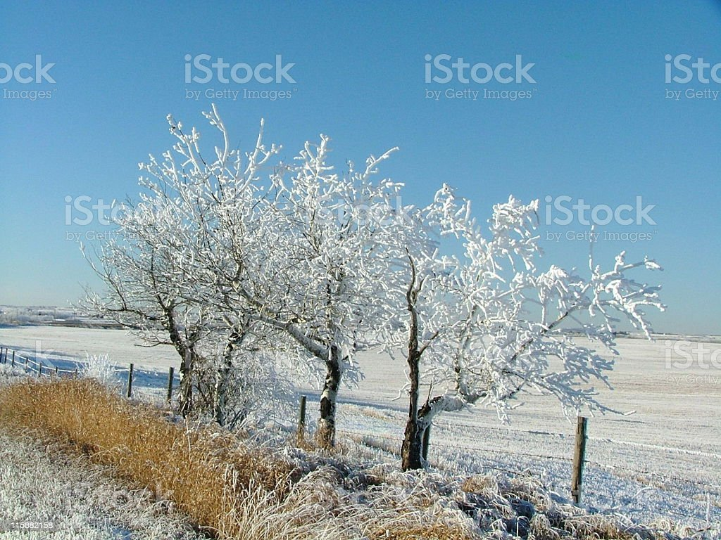 Frost Covered Trees and Open Farmland royalty-free stock photo