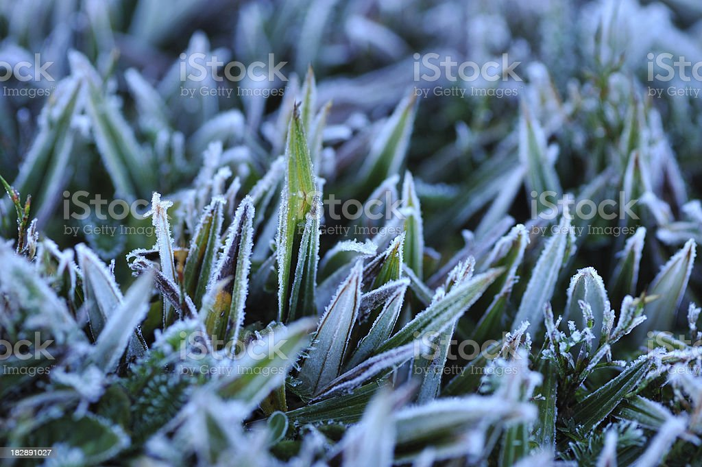 Frost Covering Grass stock photo