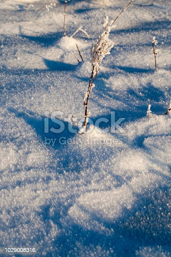 istock frost dried plant, close-up 1029008316