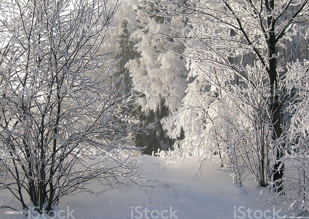 frost hoar royalty-free stock photo