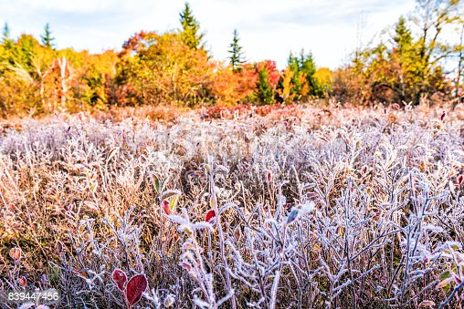 istock Frost iced trail of red blueberry bushes illuminated by morning sunlight at Dolly Sods, West Virginia with forest 839447456