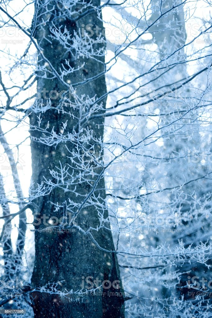 Frost in forest stock photo